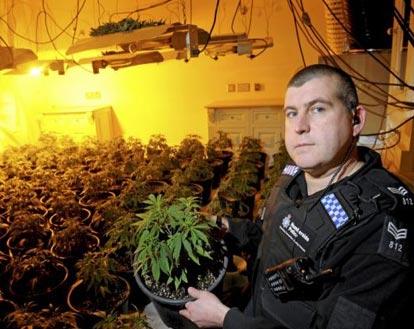 Ham Radios Assist Police in Catching Indoor Drug Growing Operations